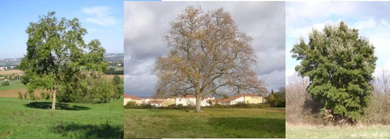 Recensement des arbres remarquables dans le PLU